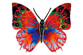 Hadar Butterfly ( Wall Hanging ) By David Gerstein
