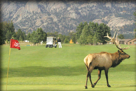 The Estes Park 18 Hole Golf Course adjoins Rocky Mountain National Park.  Our course is open mid-April through October.  We are located in the town of Estes Park, which is approximately 60 miles northwest of Denver, Colorado.   We sit in a natural valley that is surrounded by spectacular mountains.  During most of the year you are able to play your round of golf  while sharing the course with herds of deer and elk with an occasional coyote or two watching on.