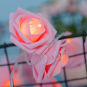Pink rose fairy light