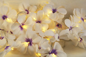 White purple colour frangipani LED fairy lights