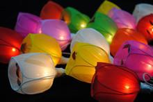 Tulip LED Fairy Lights