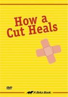 How a Cut Heals