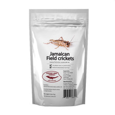 Edible Jamaican Field Crickets