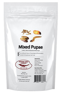 Mixed Pupae (Bag of Mixed Edible Insects)