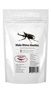 Edible Rhino Beetles