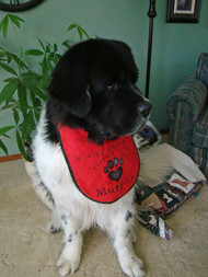large red terry drool bib