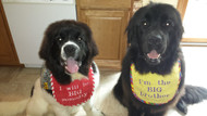 puppy size red and large yellow drool bibs