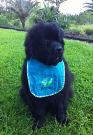 large turquoise terry drool bib