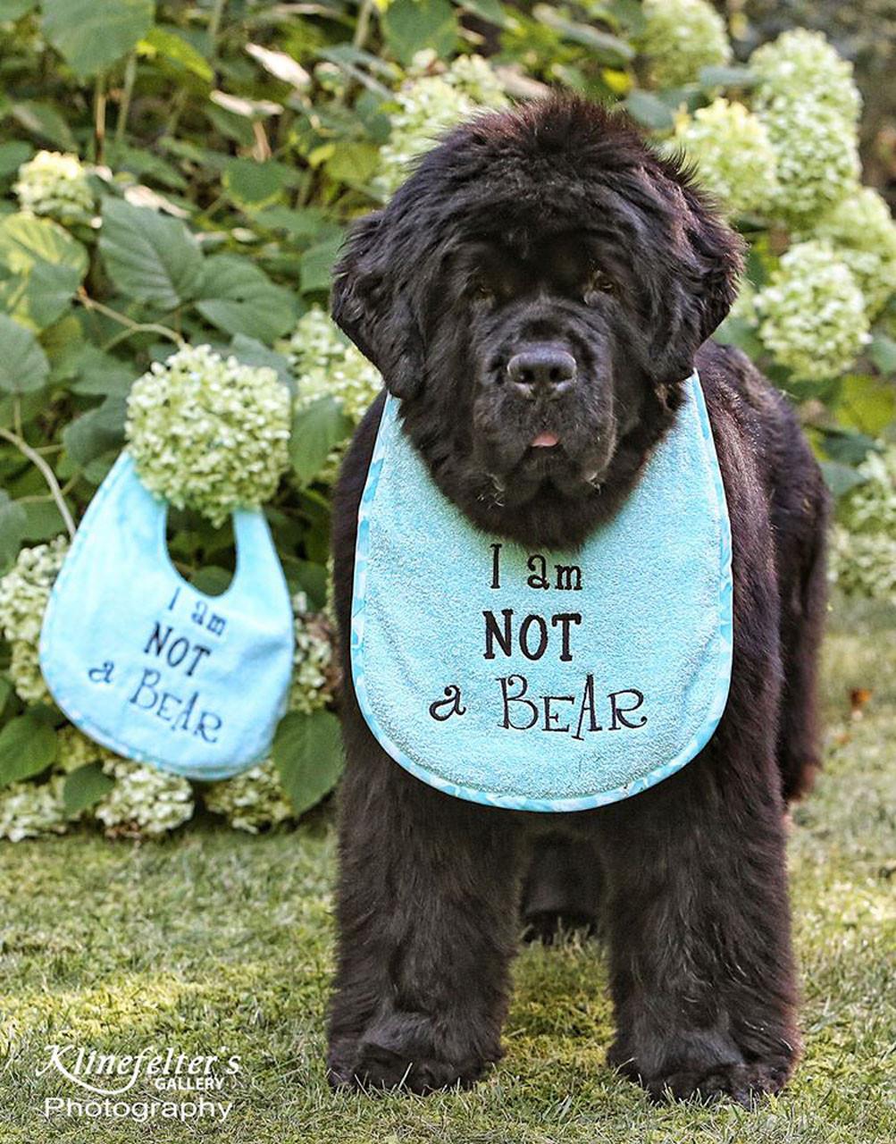 GET NEWFED Dog Drool Bib