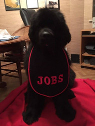 Jobs with Super Sized Personalized Bib