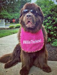 Millie with Hash Tag Bib