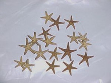 "Tiny 3/8"" to 1/2"" Starfish Natural Crafts Shells 6pc"