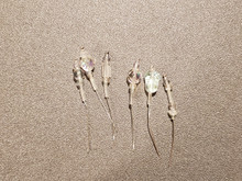 Bow Pins - Small - Iridescent and Crystal on 20ga Silver Pins P035