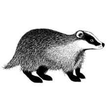 Lavinia Clear Stamps- Badger