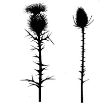 Lavinia Clear Stamps- Thistles