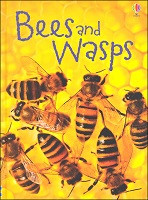 Beginner's Nature: Bees and Wasps