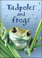 Beginner's Nature: Tadpoles and Frogs