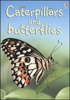 Beginners: Caterpillars and Butterflies