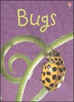 Beginner's Nature: Bugs
