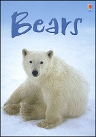 Beginner's Nature: Bears