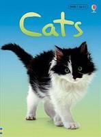 Beginner's Nature: Cats