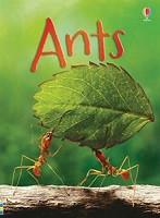 Beginners: Ants