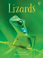 Beginners: Lizards