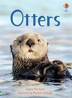 Beginners: Otters