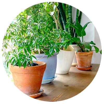 humidity-hygrometer-plants.jpg
