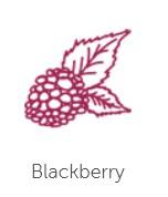 blackberry-flavour-1.jpg