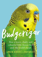 Budgerigar How a brave, chatty and colourful