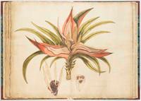 Kiekie, 1790s