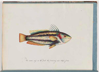 Unidentified fish, 1790s a5206023