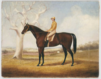 Race horse and jockey, c.1850