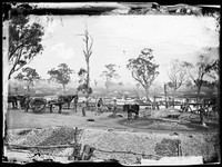 Puddling machines, Gulgong 1872