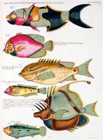 Planche Dixieme from Poissons, ecrevisses et crabes...