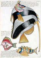 Planche I from Poissons, ecrevisses et crabes...