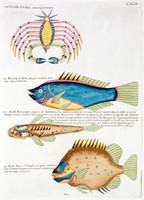 Planche L from Poissons, ecrevisses et crabes...