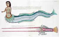 Planche LVII from Poissons, ecrevisses et crabes...