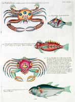 Planche XLIX from Poissons, ecrevisses et crabes...