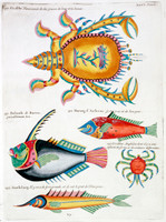 Planche XLVI from Poissons ecrevisses et crabbes...