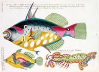 Planche XXVIII from Poissons ecrevisses et crabbes...