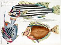 Planche XXXI from Poissons, ecrevisses et crabes...