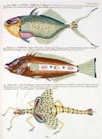Planche XXXIII from Poissons, ecrevisses et crabes...