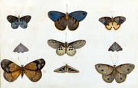 unidentified; unidentified; moth; tiger moth; glasswing butterfly; tiger moth; common brown butterfly; chalciope hyppasia; unidentified