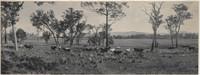Government Stud farm, Coolangatta Estate, Berry, 1904