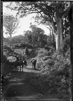 Rural scene of mountain track w. mounted man & woman (side saddle) & pack horse at bottom of path to wooded hillside.