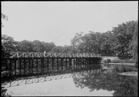 Footbridge across Victoria Pond, Camperdown – corner of Parramatta Rd & City Rd adjacent to University of Sydney and across from Broadway Shopping Centre – Grace Bros tower.