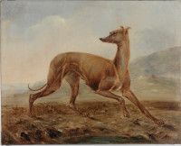 Kangaroo dog owned by Mr Dunn of Castlereagh Street, Sydney, 1853