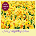 Difficult Daffodils Nature Themed Mega Wooden Jigsaw Puzzle 500 Pieces